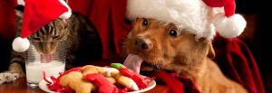Dog and cat wearing Christmas hats enjoying snacks